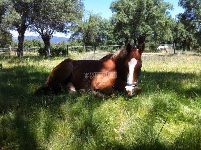 A horse on the grass