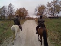 A fun horseback tour