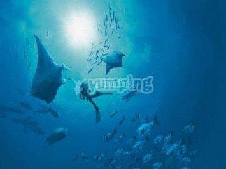 Divisa el mundo submarino