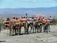 rutas a camello