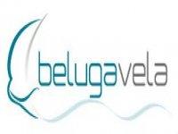 Beluga Vela Buceo