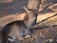 ciervos y fauna en la naturaleza