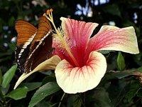 la belleza de las mariposas y las flores