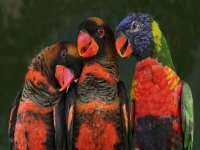 beautiful colorful parrots