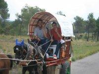 En un coche de caballos