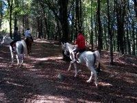 A caballo en el bosque de Guipuzcoa