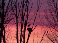 鸟类鸟的会议看日落