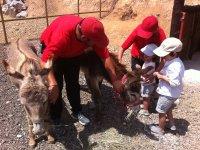 Cuidamos de los animales
