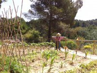 Aprende a recolectar productos de nuestro huerto