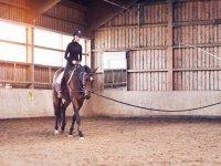 Lecciones en nivel inicial a caballo