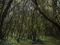 Les secrets de la forêt enchantée