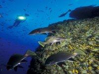 Diving in the Mar Menor