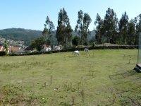 Wide pastures