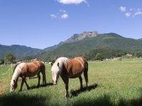 在马斯艾尔普拉放牧的马匹