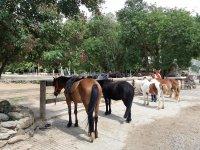 Pony preparati per l'itinerario