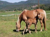 母马和她的小马驹在赫罗纳