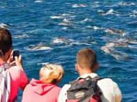 Viendo delfines en grupo