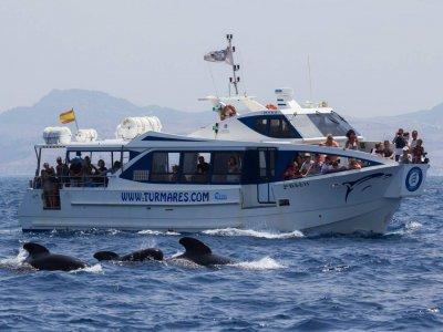 Turmares Paseos en Barco