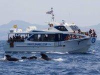 Barco de avistamiento de cetaceos en Tarifa