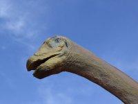Cabeza de dinosaurio