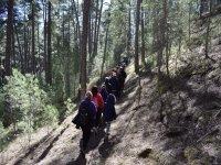 Subiendo hacia el bosque