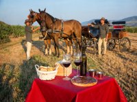 Cata de vino y comida