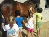 Peinando y limpiando al caballo