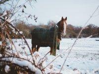 Caballo abrigado en la nieve