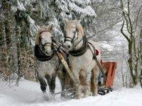 Paseo en trineo con caballos
