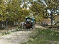 Con el carro de caballos por la Sierra Norte de Madrid
