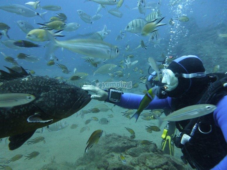 Felix, the grouper
