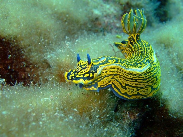 Dragon Snail