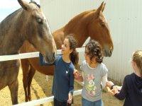 Contacto directo con los caballos