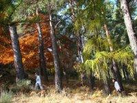Senderismo por bosques