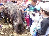 Acariciando al cerdo