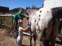 Brushing the horse