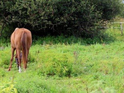 HALIMIUM Andalucía Rutas a Caballo