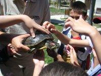 Acariciando la tortuga