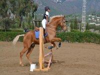 Saltando en caballo