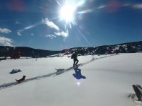 Come and enjoy the mountain with your dog