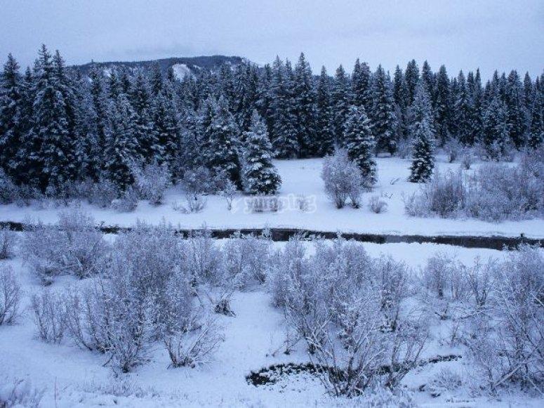 Descubre paisajes nevados