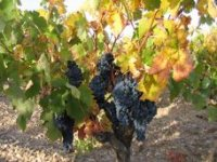 Nuestros viñedos