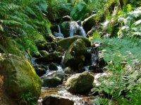 Agua saltando entre las rocas