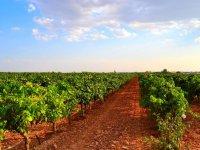 Vinedos y tierra rojiza