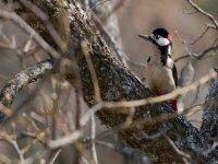 Descubre especies de aves