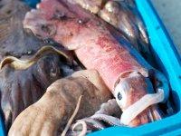 Fishing with Mediterranean Charter Portginesta Fishing