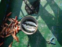 Deep sea fishing in Asturias