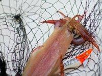 Take advantage of the fishing trip