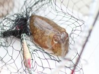 We provide you with all fishing materials