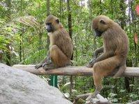 Simios sentados